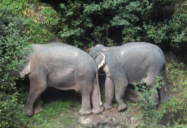 Elephants saved from Thai waterfall released into wild