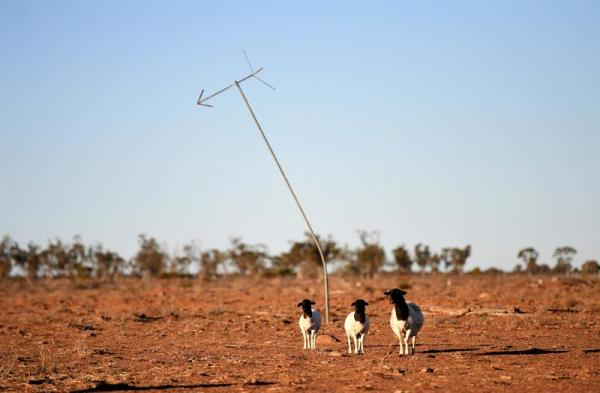 Queensland government backs new technology to make crops