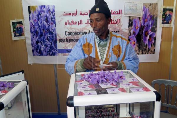 In Morocco, farming saffron is a family affair