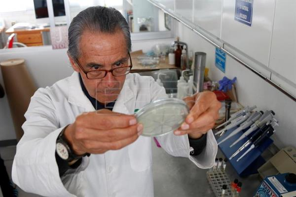 Mexican researcher Alfonso Islas has created an antibiotic using frog skin, which cures inflamed cow udders without leaving a trace of toxicity in the milk. EFE-EPA/File