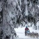 A musher competes with his dogs during the Sedivackuv Long 2019 sled dog race near the Czech-Polish border in the Orlicke mountains, around the village of Destne v Orlickych horach, Czech Republic, Jan. 25, 2019. EPA-EFE/MARTIN DIVISEK