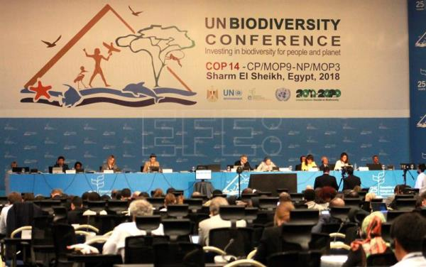 A general view of the final press conference of 14th Meeting of the Conference of the Parties to the Convention on Biological Diversity (CBD COP 14 Egypt) held in Sharm El Sheikh, Egypt, Nov. 29, 2018. EPA-EFE/Isaac J. Martín
