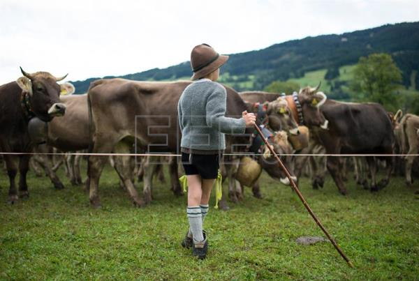 A young Allgau herdsman rests during the 'Allgaeu Viehscheid' cattle drive in Bad Hindelang, Germany, Sept. 11, 2017. EPA-EFE/DANIEL KOPATSCH