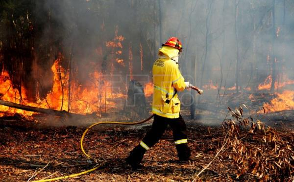 Forest fires have razed 575,000 hectares of land in Australia since July
