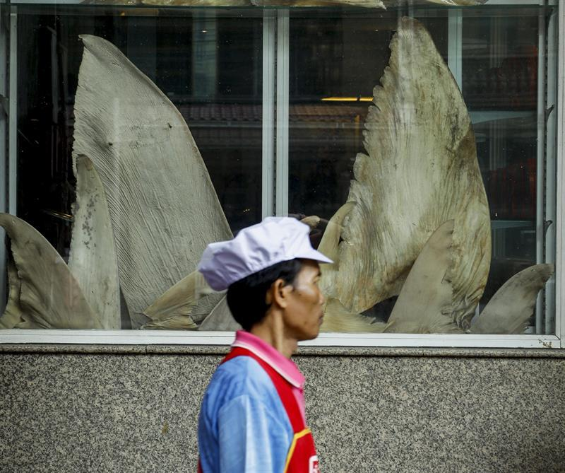 Thailand was largest exporter of shark fins during 2012-16