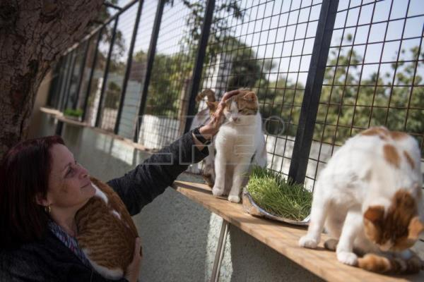 Dania Safwat, who used to save stray cats, plays with animals at a pets' hotel and shelter in Giza, Egypt, Feb. 7, 2019. EPA-EFE/MOHAMED HOSSAM