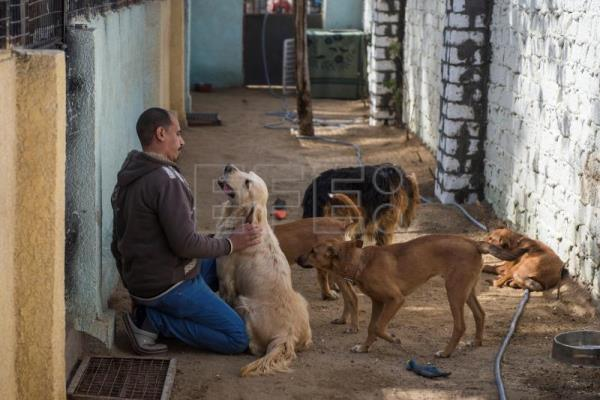 Ashraf Saber, who runs a pets' hotel and shelter, plays with dogs at the hotel in Giza, Egypt, Feb. 7, 2019. EPA-EFE/MOHAMED HOSSAM