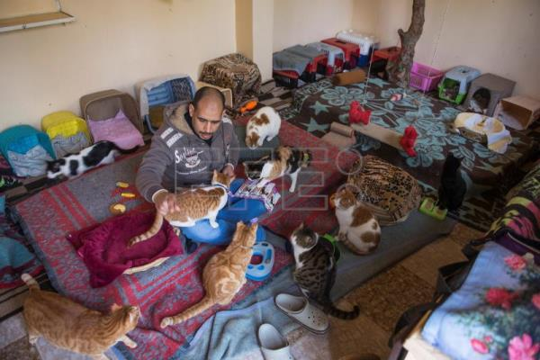 Ashraf Saber, who runs a pets' hotel and shelter, feeds cats at the motel in Giza, Egypt, Feb. 7, 2019. EPA-EFE/MOHAMED HOSSAM