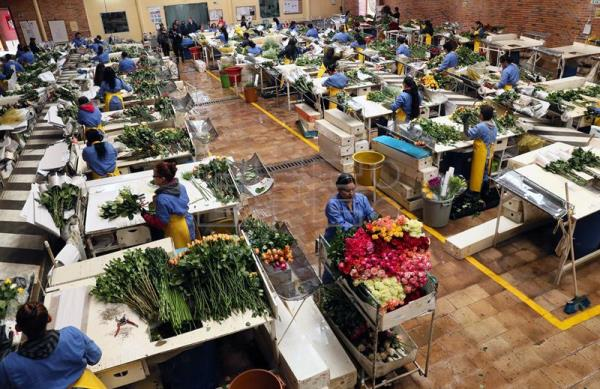 Colombian Floral Industry Prepares For Valentine S Day 2019