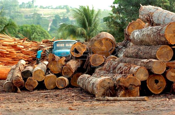 An undated file photo showing a wood processing plant in Brazil. EPA-EFE FILE/MARCELO SAYAO