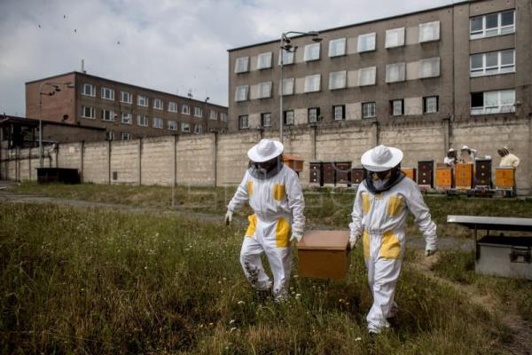 Inmates get buzz out of beekeeping