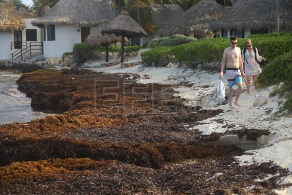 Tulum, other Mexican Caribbean areas hit by new massive