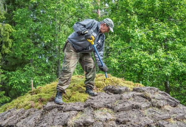 A volunteer covers the top of a pine tar pit with peat built on the grounds of the Yli-Kirra Outdoor Agricultural Museum in Punkalaidun, Finland, June 27, 2017. EPA/MARKKU OJALA