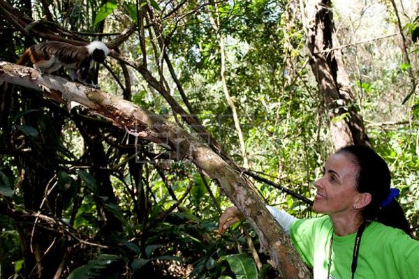Undated file photo of Rosamira Guillen observing a cotton-top tamarin monkey, an endangered species found only in Colombia, where she has created a project to protect it from extinction. EFE/Lisa Hoffner/Cotton-top Tamarin Foundation