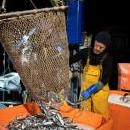 A fisherman unloads his catch in Newlyn Harbour, Cornwall, Britain, 26 February 2019. EPA-EFE/WILL OLIVER