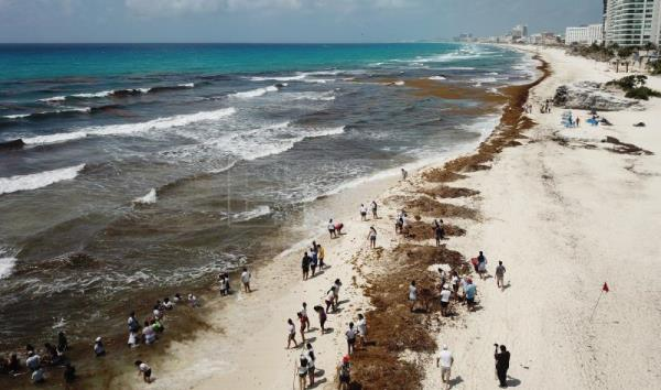 Massive seaweed influx in Cancun's hotel zone | Life | English