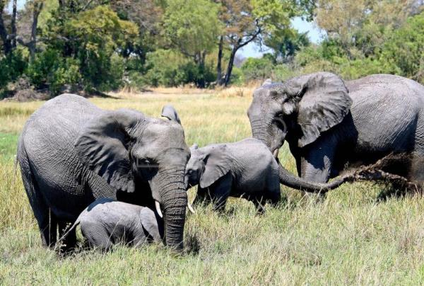 Botswana lifts elephant hunting ban