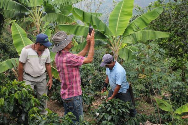 Colombian farmers aim to draw millennials back to the fields