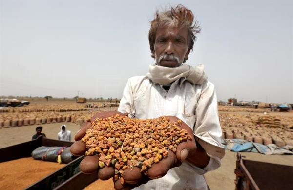 Indian farmer Ghanshayam shows his chana (gram) produce as he waits for it to be weighed and sold at the Mandi or a stock house which is governed by the MP Mandi Board, a state agency near the Sagar, Madhya Pradesh India, May 16, 2018. EPA-EFE/HARISH TYAGI ATTENTION: For the full PHOTO ESSAY text please see Advisory Notice epa06803807