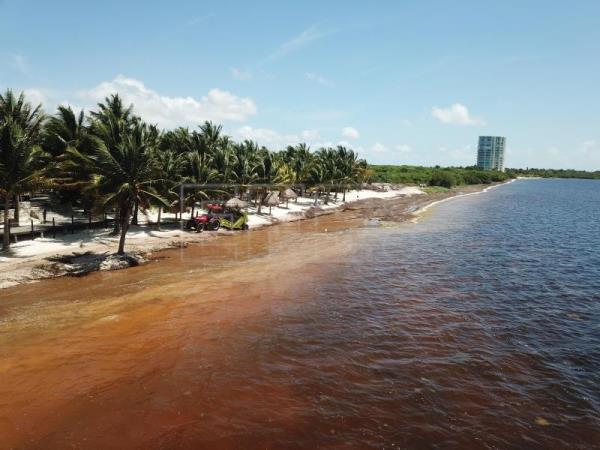 Gang violence, algae and no publicity shrink Mexican Caribbean tourism