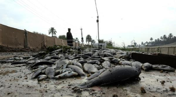 A Fish Breeder stands next to piles of dead silvery Carp fish at his farm in Saddat al-Hindiyah town, in Babylon province, 80km south of Baghdad, Iraq on Nov. 8, 2018. EPA-EFE/AHMED JALIL