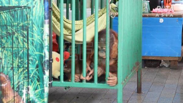 Activists call for boycott of Thai zoo over alleged animal mistreatment