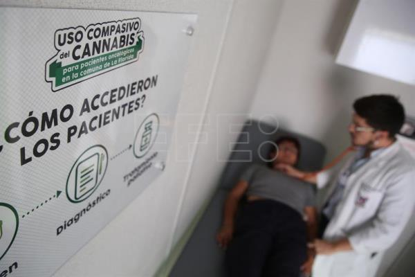 Chile launches 1st LatAm study on marijuana benefits for cancer patients