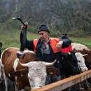 Bavarian mountain farmers accompany their cattle on two boats tied together as they are transported back home from the summer pastures over the Koenigssee lake, in Koenigssee, Germany, Oct. 7, 2017. EPA-EFE/CHRISTIAN BRUNA