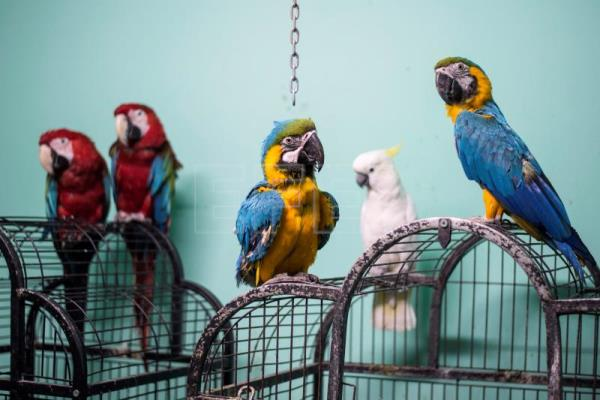 Parrot-training academy in Egypt wants to spread its wings